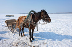 Horse at the bank of frozen river Royalty Free Stock Image