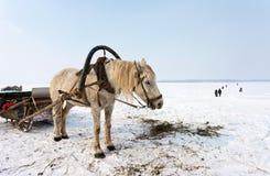 Horse at the bank of frozen river Stock Photos