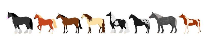 Horse banner Stock Photos