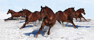 Horse banner Stock Photo