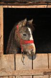 Horse in the barn. Protection Stock Photo