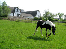 Horse and barn. A horse getting some fresh air at a horse farm royalty free stock images