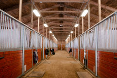 Horse Barn Animal Sport Paddock Equestrian Ranch Racing Stable Royalty Free Stock Photography