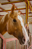 horse in barn behind cage Stock Photography