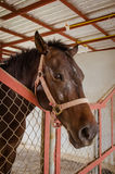 Horse in barn behind cage Royalty Free Stock Image
