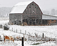 Horse and barn in heavy snow Royalty Free Stock Photo