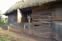Horse in barn at Lewa Conservancy, Kenya, Africa Royalty Free Stock Photography