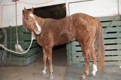 Horse in barn Stock Photos