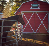 Horse by a barn Stock Photos