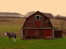 Horse and barn at sunrise. Scene of a horse and old barn at sunrise in the country Royalty Free Stock Photo