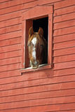 Horse in a Barn Window Royalty Free Stock Photos