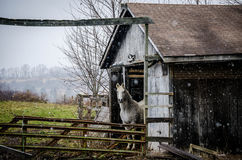 Horse and Barn Stock Photos