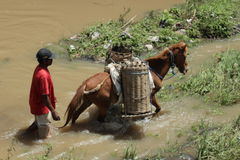 Horse and basket. Horse with a traditional basket carry sand and some material from river on Boyolali, Central of Java, Indonesia Royalty Free Stock Photography