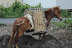Horse and basket. Horse with a traditional basket carry sand and some material from river on Boyolali, Central of Java, Indonesia Stock Image