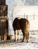 Horse basks Stock Photos
