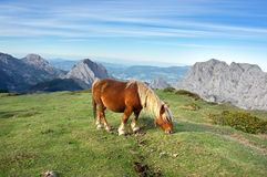 Horse in basque country mountains Royalty Free Stock Photos