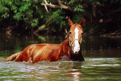 Horse bath Royalty Free Stock Image