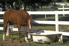 Horse and bath tub waterer, Malibu, CA Royalty Free Stock Photo