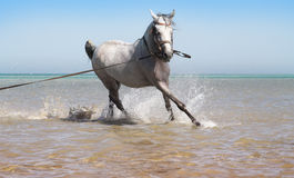 The horse bathes in the sea Royalty Free Stock Photos