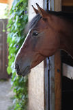 Horse. Bay horse in the stall stock photos