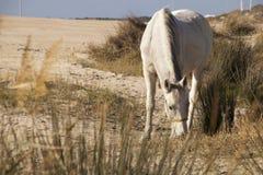 Horse in a beach Stock Photos