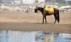 Horse at the Beach Stock Images