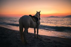 Horse on a beach lookin to the sea royalty free stock image