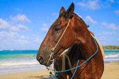 Horse on the beach. Looking into the distance Stock Photos