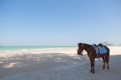 Horse on the beach Stock Images