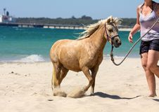 Horse at the beach Royalty Free Stock Images