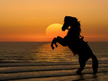 Horse on beach at sunset. Silhouetted horse rearing on hind legs on beach with orange sunset and sea background Stock Photography