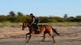 Horse on the Beach, Victoria, Australia stock video