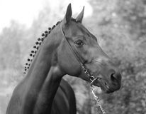Horse. Beautiful brown young strong horse Royalty Free Stock Photos
