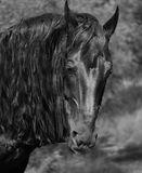 Horse. Beautiful brown young strong horse Stock Photo
