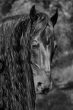 Horse. Beautiful brown young strong horse Stock Photography