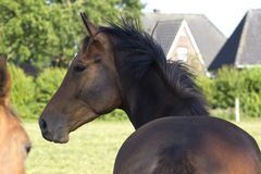Horse!! Stock Image