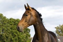 Horse... Stock Image