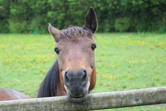 Horse. royalty free stock images