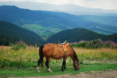 Horse in beautiful landscape Royalty Free Stock Photo
