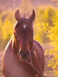 Horse in beautiful meadow Stock Photos