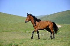 Horse. A Beautiful mountain horse run Stock Image