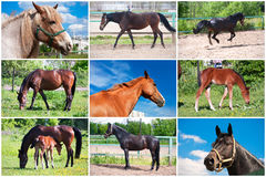 Horse Stock Photos