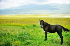Horse on a beautiful plain Stock Photos