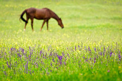Horse in a beautiful rural scenery Stock Images