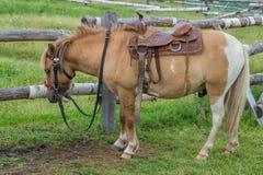 Horse with beautiful saddle Stock Photo