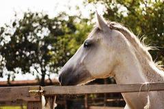 Horse. Beautiful horse standing in padock Stock Images