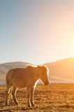 Horse in beautiful sunrise Stock Photography
