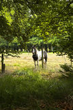 Horse behind barbed fence. Horse standing behind barbed fence in the forest in summer - vertical Royalty Free Stock Photos
