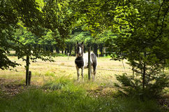 Horse behind barbed fence. Horse standing behind barbed fence in the forest in summer - horizontal Royalty Free Stock Photos