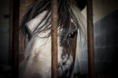 Horse behind bars Stock Photos